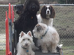Dog Boarding Bellingham Wa